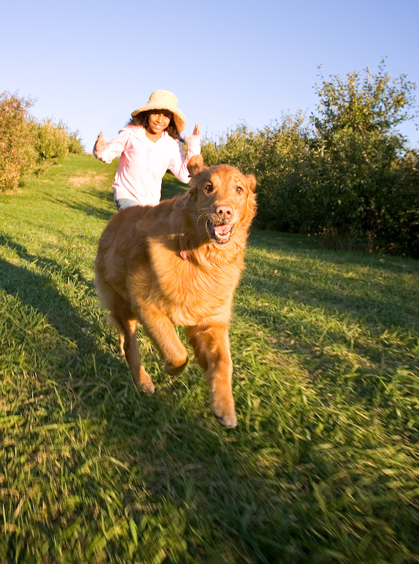 dog running toward camera in orchard_Y0U7568_Robert-Holland.jpg